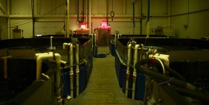 Oceanic Innovation's fish farm is made up of six 6,000 gallon tanks.
